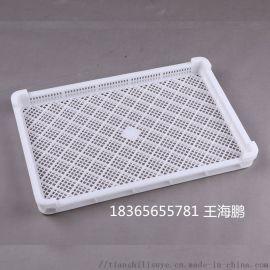 新疆大枣烘干盘 塑料烘干盘 塑料烘干盘厂家