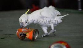 百鸟展示鹦鹉表演出租海洋生物展示出租马戏团表演出租