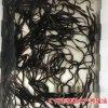 鳗鱼苗批发价格美洲鳗鱼苗养殖基地日本鳗鱼苗批发