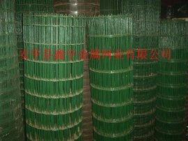涂塑电焊网涂塑荷兰网