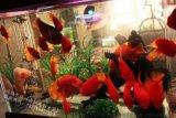 魚缸保養 清洗找無錫鴻顏水族 13771145752