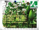 拱棚建設-春秋拱棚建設造價分析-壽光市萬禾農業