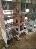 瓷砖兔子笼兔子窝兔舍厂家直销