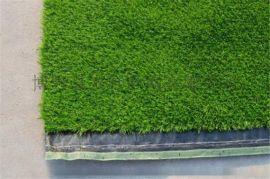 **的2.5厘米足球场草坪,人造草坪制造商