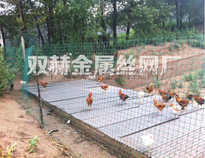 供应阜阳绿色养鸡  铁网生产厂家