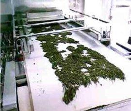 新型艾叶微波烘干设备 艾叶快速干燥机 专业厂家定**叶杀菌干燥设备 价格
