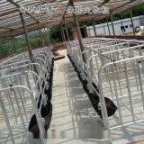 山东母猪定位栏热镀锌母猪限位栏单体栏尺寸厂家定做