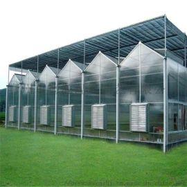阳光板温室大棚 温室大棚厂家 连栋温室