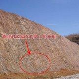 供應貴州14號TBS網  (邊坡綠化錨噴用網)