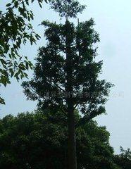 仿迎客鬆、仿椰樹、仿棕桐樹仿生通信塔