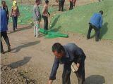 道路綠化防塵網 甘肅沙地用防塵網 草籽種植覆蓋網