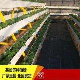 英耐尔草莓无土栽培槽,立体种植架