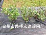 生產供應批發農業園林園藝用品 防草布 地布 抑草布 除草布