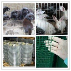 养殖笼子网电焊网厂家交货方便及时、价钱便宜