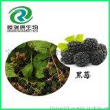 黑莓提取物 黑莓粉