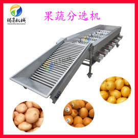 自动滚筒分选机 不锈钢土豆分选机
