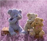 毛绒玩具定制三不表情害羞熊不听不看不说小熊新款公仔