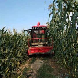 青饲料收获机,玉米秸秆收割机