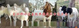 波尔山羊销售|小尾寒羊报价表