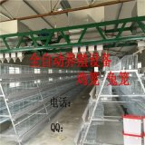 金兴厂家直销养殖设备 阶梯式蛋鸡笼 四层五门A型蛋鸡笼 人字型镀锌蛋鸡笼