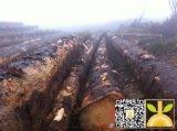 尚高木业长期供应新伐法国云杉ABC锯材级原木