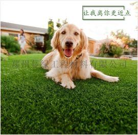 人造草坪廠家直銷-河南人造塑料草坪運動草坪