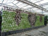 链条式墙体栽培