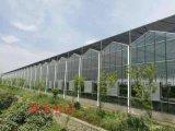 阳光板智能温室,玻璃智能温室,连栋智能温室建造