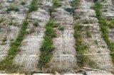 河道护坡植物纤维椰丝毯