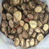 創新大排溼的蘑菇烘乾系統,節能的食用菌烘乾機