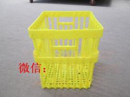 鸡蛋筐价格 塑料鸭蛋运输筐 种蛋周转筐厂家