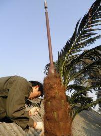 20米仿生棕榈树通信基站塔,25米仿生松树通讯塔