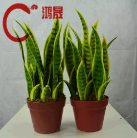 仿真植物批发   真虎尾兰 人造植物假外母舌 仿真虎皮兰龙舌兰