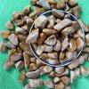 木紋卵石 黃色木紋石3-6cm 園林景觀用木紋石
