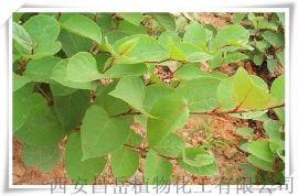 白藜芦醇50%   葡萄皮提取物
