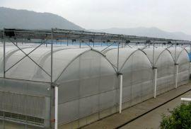 山东青州薄膜温室大棚