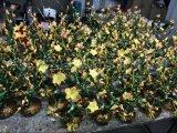 珐琅彩花瓶摆件  创意家居新房客厅陶瓷装饰花瓶工艺品定制