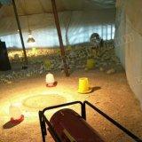 綦江开县养鸡保育电热风机 鸡苗转群保温灯电加温热风机