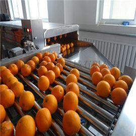 【佩奇】毛刷水果清洗机 自动水浴橘子清洗机 洗果机