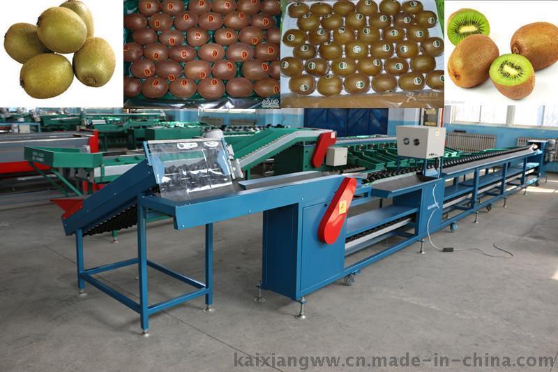 自动猕猴桃分选机 分选猕猴桃大小的机器