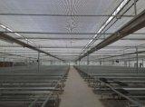 供应黑龙江伊春智能温室大棚 铁力市育苗温室建设