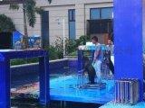 海洋生物展示海狮表演出租涛涛海洋生物租赁公司
