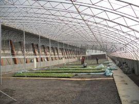山东现代化多肉温室大棚 建多功能种植蔬菜温室暖棚造价