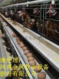 金凤鸡笼子 鸡笼 自动化养鸡设备 河南鸡笼厂家 肉鸡笼