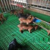 塑料羊糞板 羊舍用扣板 塑料糞板生產廠家