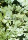 绞股蓝提取物gynostemma pentaphyllum p.e.