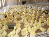 塑料平网有什么规格的  养鸡网  圈地围网