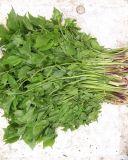 山野菜,山菜根