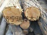 常年供應優質槐木原木