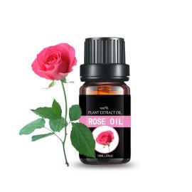 玫瑰花提取 玫瑰精油